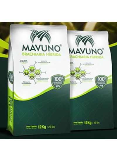 Sementes de Brachiaria Hibrida Mavuno Incrustadas - 12 kg - Preço p/ kg R$ 36,83