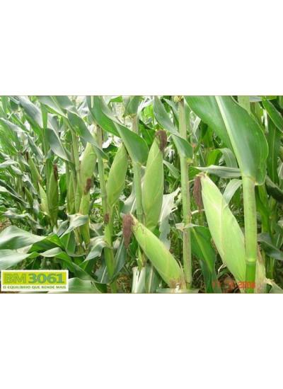 Sementes de Milho BM3061 - 60 mil sementes - Milho Verde e Silagem - Entrega Imediata