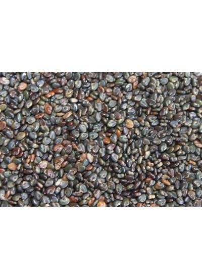 Sementes de CROTALARIA SPECTABILIS - Embalagem 25 kg
