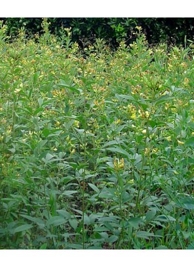 Sementes de Feijão GUANDU ANÃO cv. IAPAR 43 - Embalagem de 25 Kg