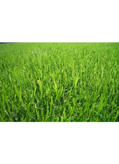Sementes de GRAMA BERMUDA Incrustadas - 20 g / m2 - 05 kg - A PRONTA ENTREGA - Preço p/ kg R$ 43,99
