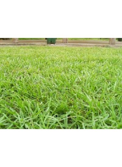 Sementes de GRAMA PENSACOLA VC 75% - Embalagem 05 Kg