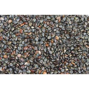 Sementes de CROTALARIA SPECTABILIS - Embalagem de 25 Kg