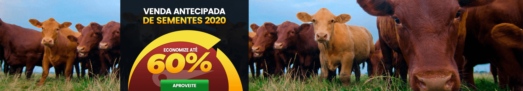 Venda antecipada de sementes 2020