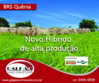 Banner BRS Quenia