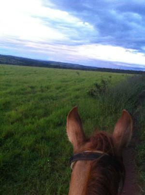 Diferimento Pastagem Cavalo
