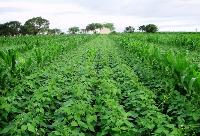 Adubacao Verde